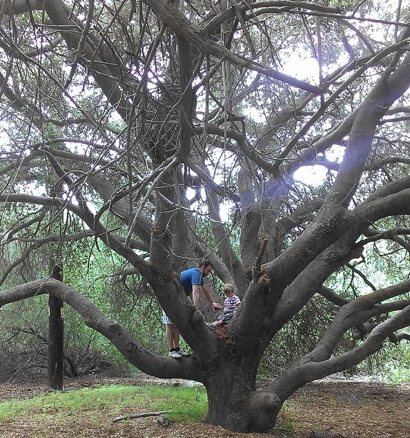 Trees Tecolote Canyon