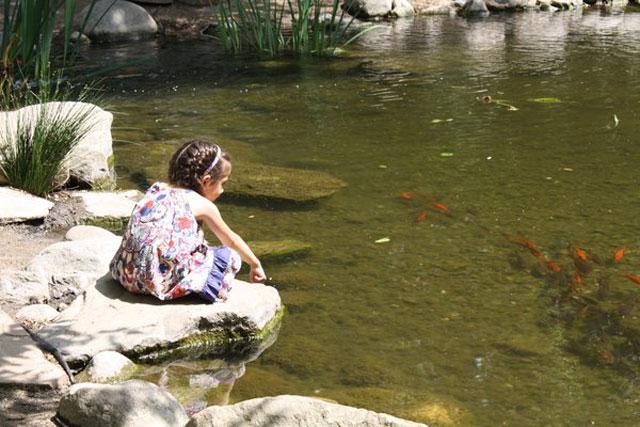 girl_sitting_koi_pond_descanso_gardens