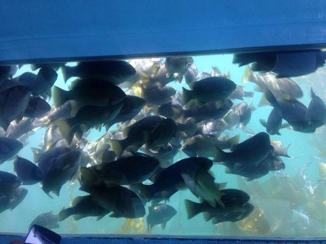 Submarine Redondo Beach