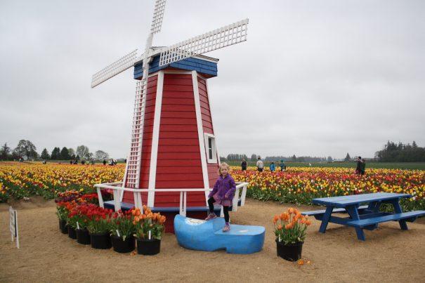 Tulip Fest 2